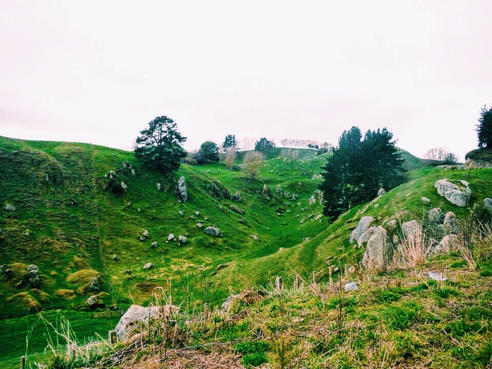 This is what a farm in New Zealand looks like