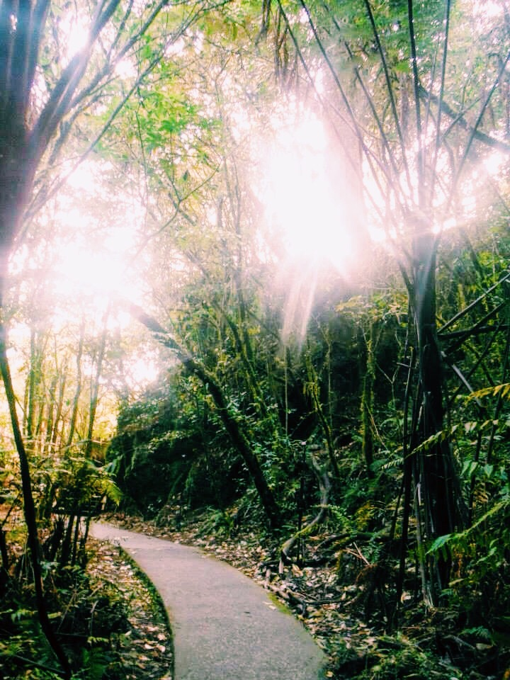 A gorgeous hike while I was waiting for my tour of the Aranui cave
