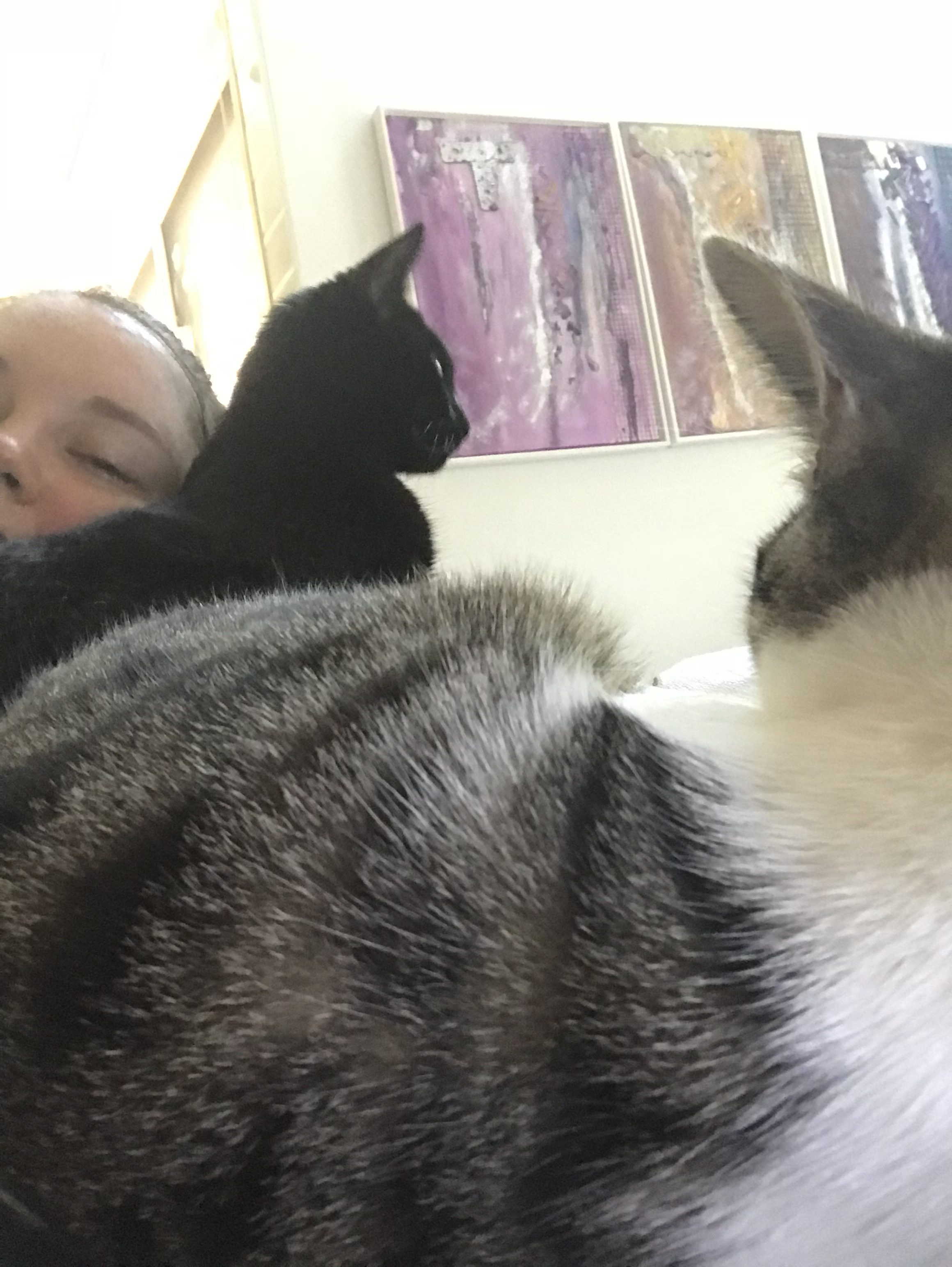 A day in the life of a kitten sitter