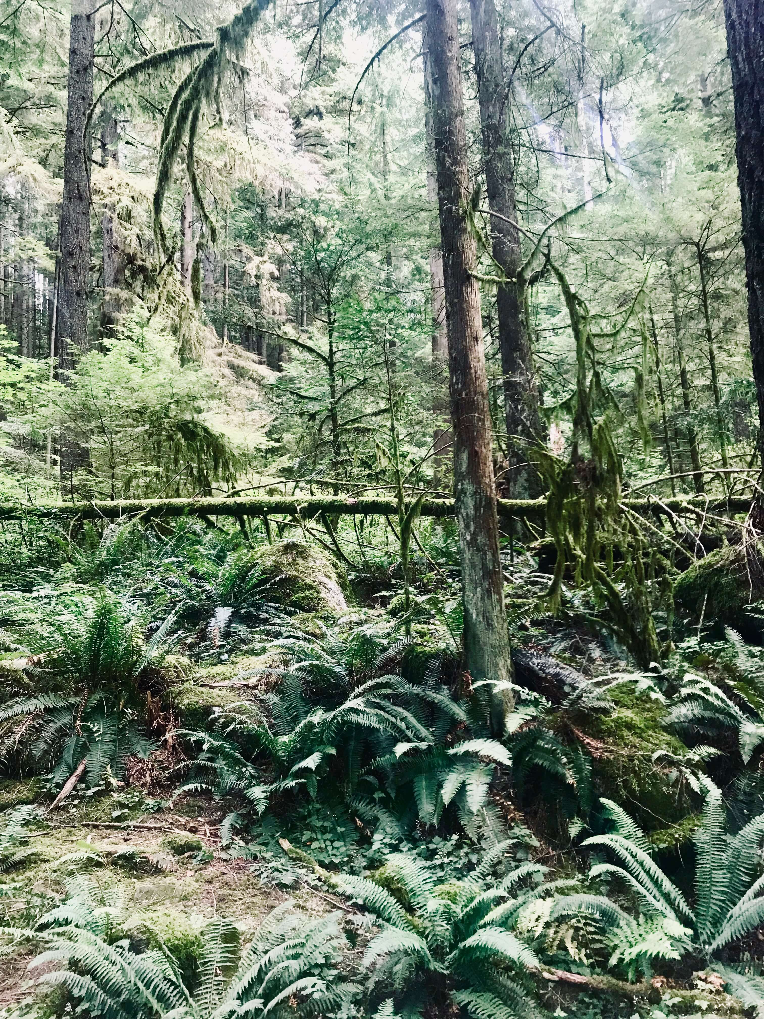 Hiking Lynn Canyon in Vancouver