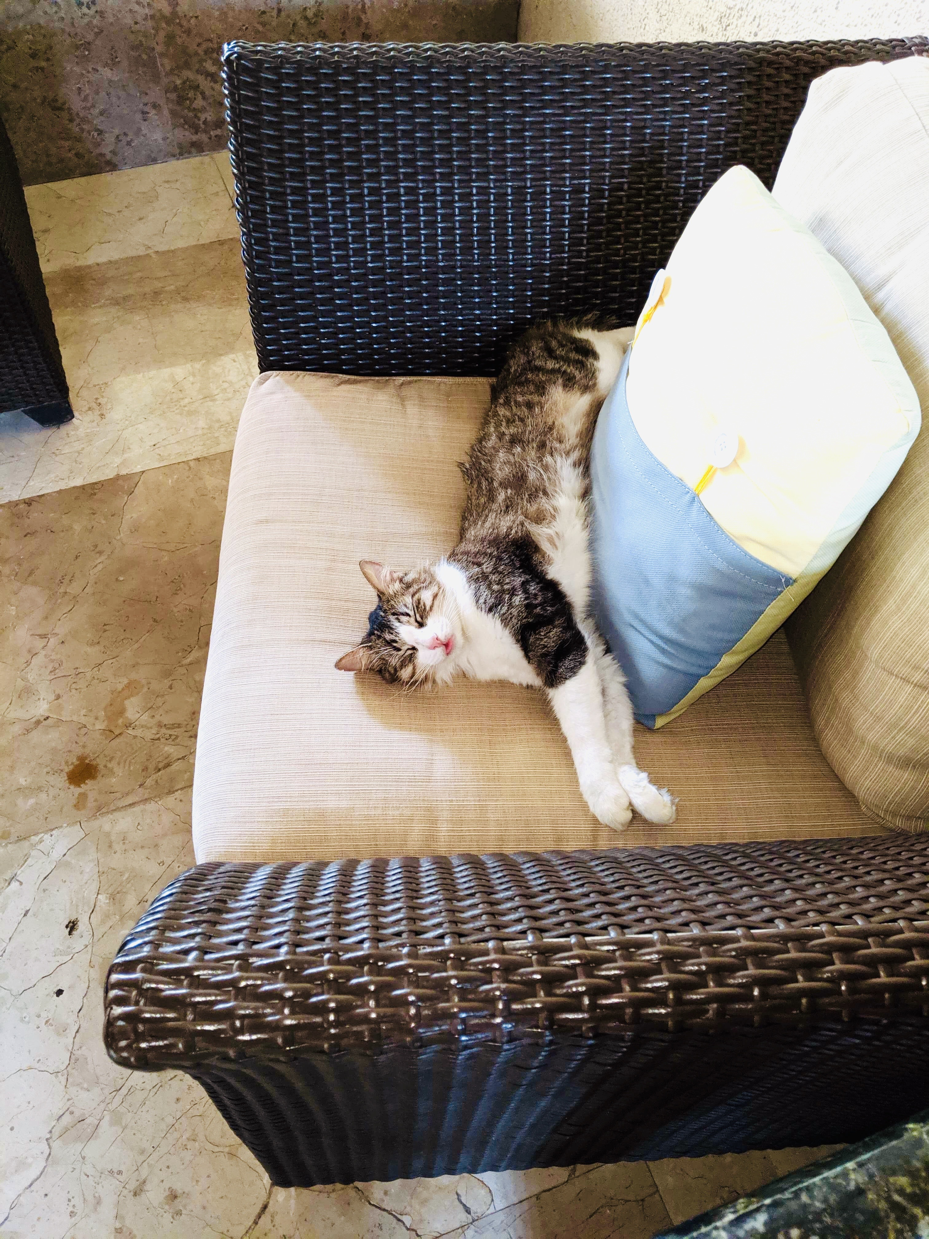 A cat sleeping on a chair in the hotel lobby