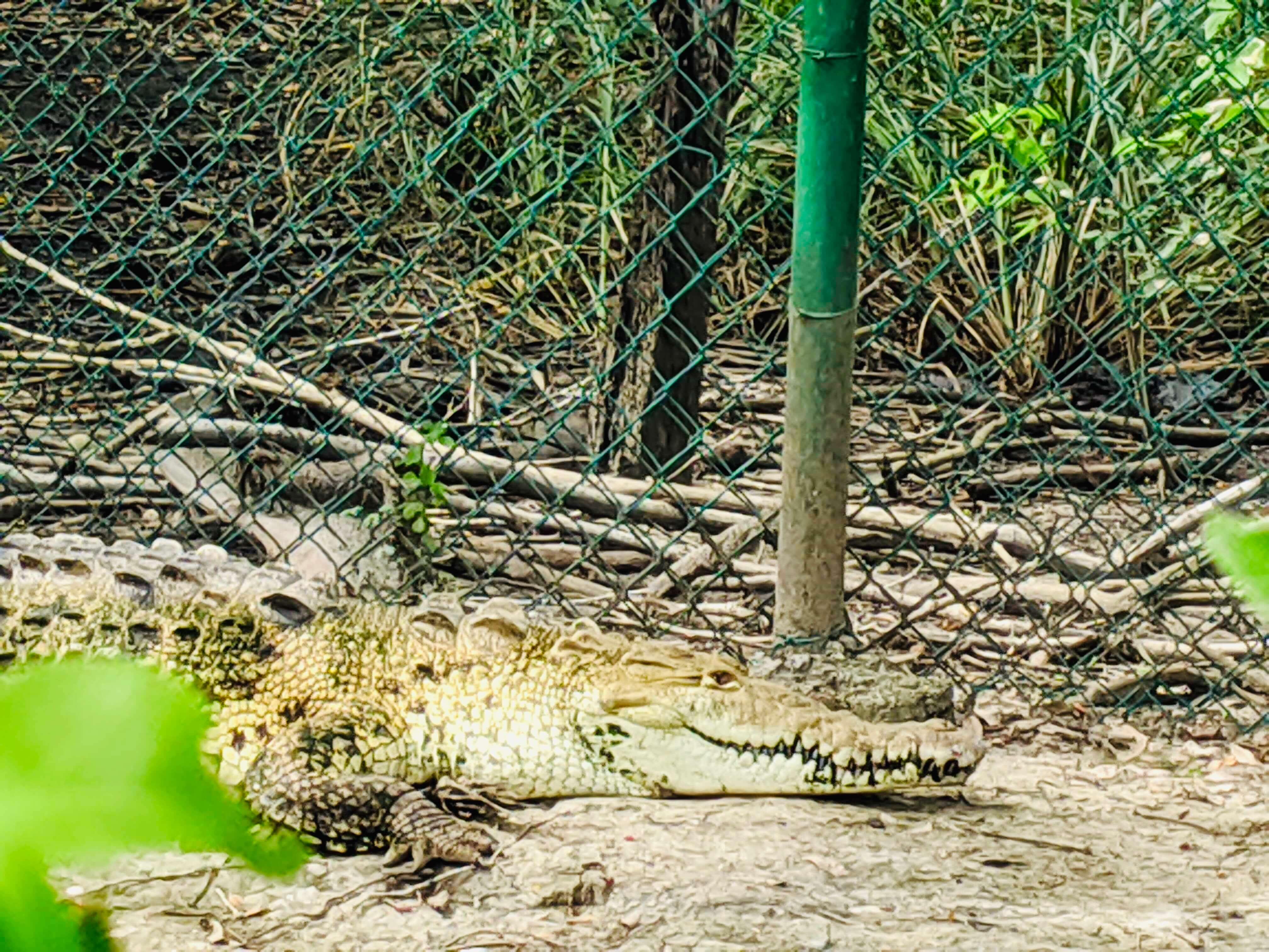 The 36 year old, blind crocodile, Esperenza